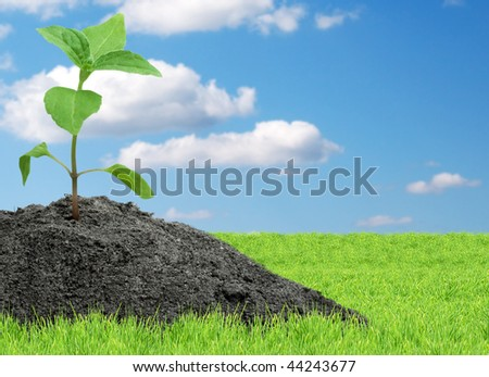 Green sprout - stock photo
