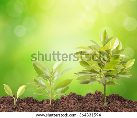 Green sprout a growing from