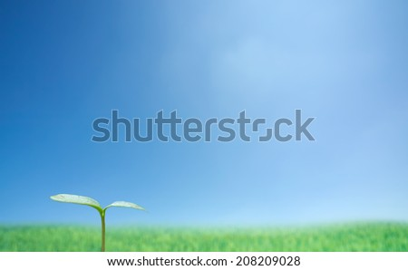 Green sprout against blue sky.  - stock photo