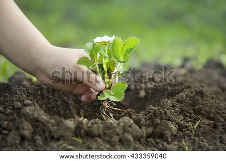 Green Sprout and Children Hands - stock photo