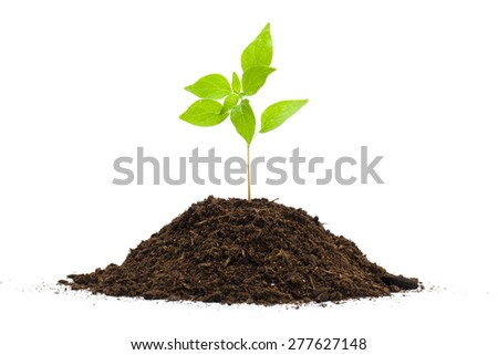 Green sprout and soil isolated on white - stock photo