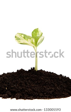 Green sprout from the earth on a white background.