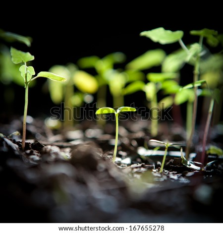 Green sprout growing - stock photo