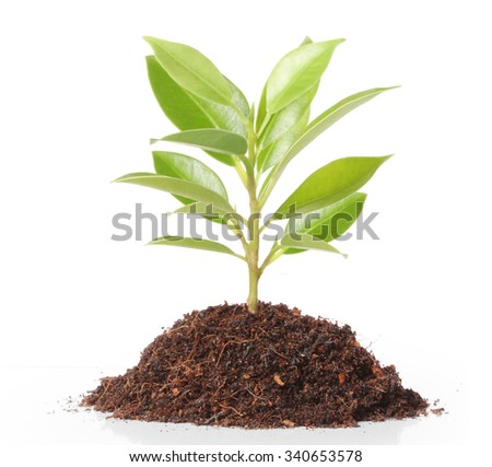 Green sprout growing from - stock photo