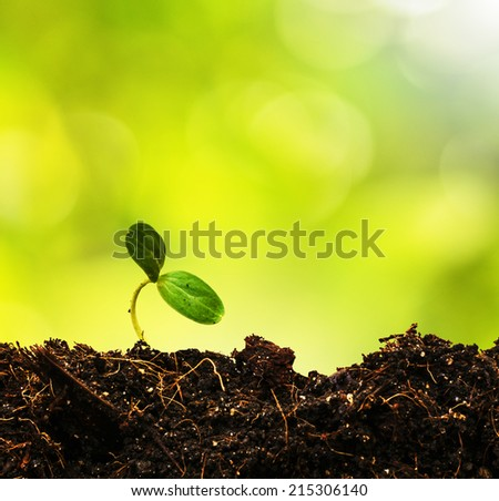 Green sprout growing from ground - stock photo