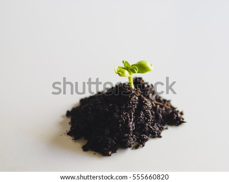 Green sprout growing from ground, new or start or beginning concept