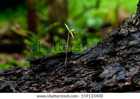 Green sprout growing from old Timber - stock photo