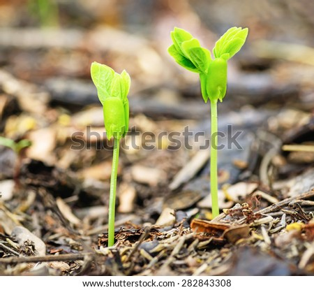 Green sprout growing from seed in natural fertilizers with rotting leaves