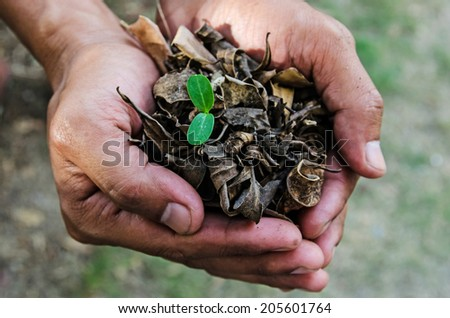 Green sprout growing from seed on hands - stock photo