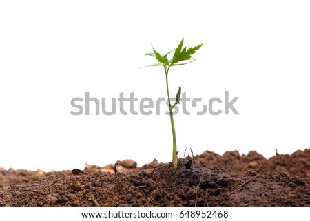Green sprout growing out from soil isolated on white background