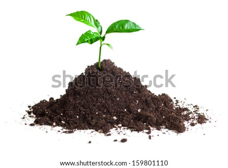 green sprout grown on soil isolate - stock photo