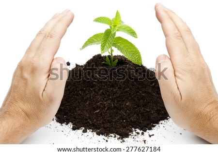 Green sprout growth Hands on seedling isolated on white - stock photo