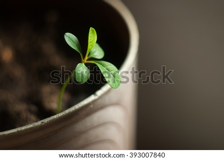 green sprout in a pot - stock photo