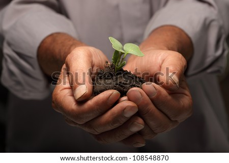 green sprout in senior man hand - stock photo