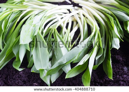 Green sprout in the ground