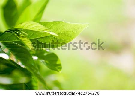 Green sprout leaf with selective focus for background with copy space