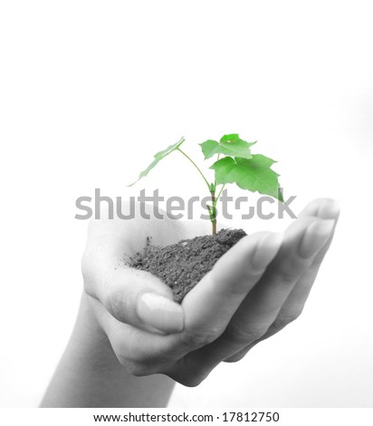 Green sprout of tree in palm of young woman