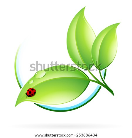 Green sprout with leaves and ladybird isolated on white - stock photo