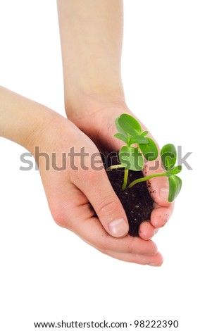 Green sprouts in child's hands, isolated on white - stock photo
