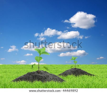 Green sprouts isolated  on a blue background - stock photo