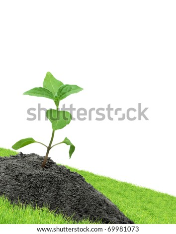 Green sprouts isolated  on a white background - stock photo