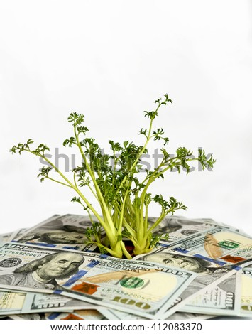 Green sprouts of dollar bills (feed business, prosperity, economic growth, private business - concept) - stock photo