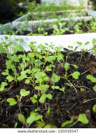 Green sprouts seeding in soil