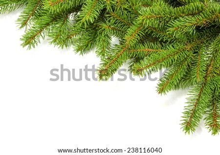 green spruce branches as a border over white paper - stock photo