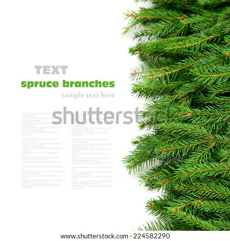 green spruce branches on white background - stock photo