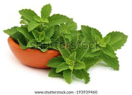 Green stevia leaves with a small bowl over white background - stock photo