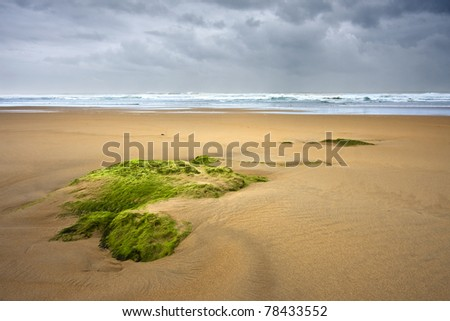 Green stone in the beach at sunset - stock photo