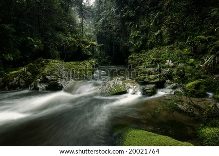Green stream in New Zealand