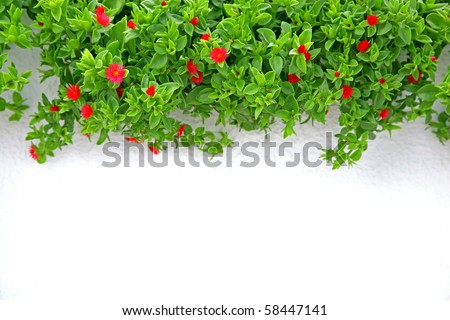 green succulent plant against white wall background - stock photo