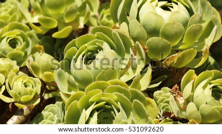 Green succulent plants on a warm summer day