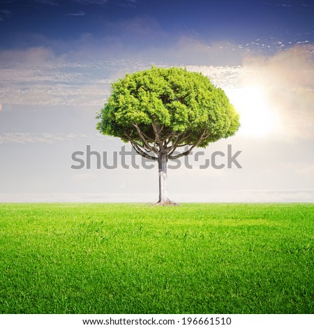 green summer field with big tree - stock photo