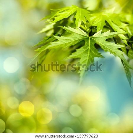 Green summer foliage, abstract natural backgrounds