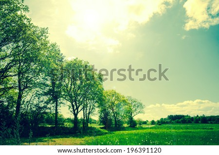 Green summer landscape with trees and fields - stock photo