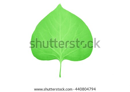 green summer leaf isolated on the white background - stock photo