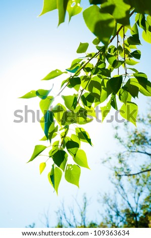 green summer leaves and blue sky with sun - stock photo