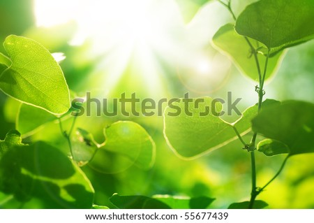 Green Summer Leaves outdoor - stock photo