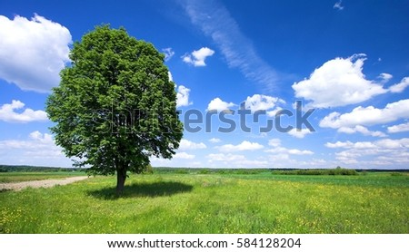 Green summer meadow with flowers and herbs and a big tree.