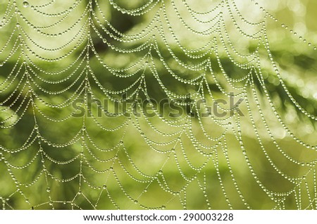 Green summer plants with dew water drops and  shiny web, macro background - stock photo