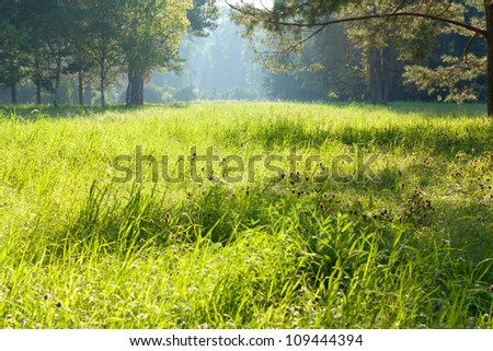 Green sunlit glade. Morning Landscape - stock photo