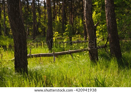 green sunny grass of tranquil summer evening forest. Focus on foregrounds grass - stock photo