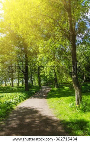 Green sunny spring scandinavian park with hiking trail, tranquil natural seasonal background - stock photo