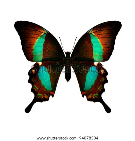 Green Swallowtail - stock photo
