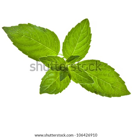 green sweet mint leaves isolated on white - stock photo