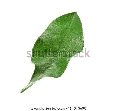 Green tea leaf, isolated on white - stock photo