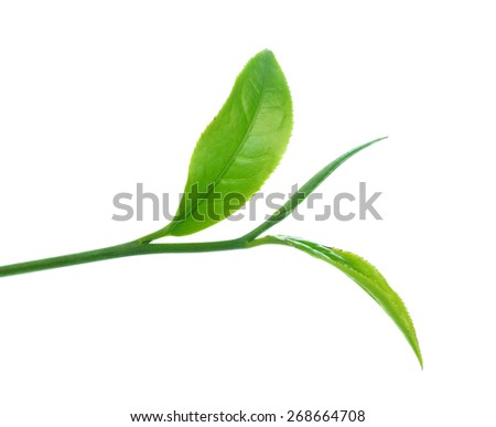 Green tea leaf isolated over white background. - stock photo