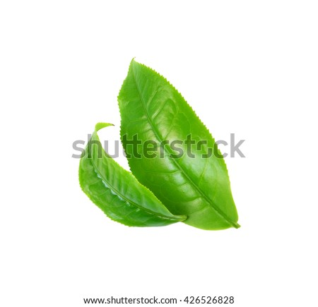 green tea  leaf photography isolated on white background - stock photo